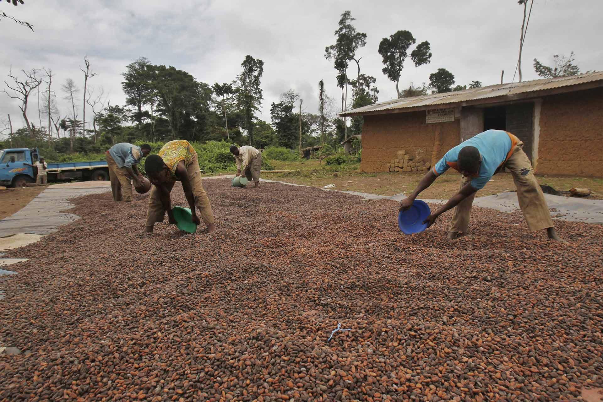 La organización monitorea el fenómeno para no se produzcan emergencias relacionadas con la seguridad alimentaria