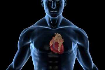 Un grupo de científicos logró imprimir órganos blandos humanos en 3D