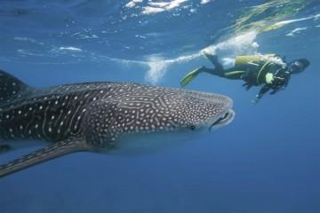 Drones para prevenir ataques de tiburones