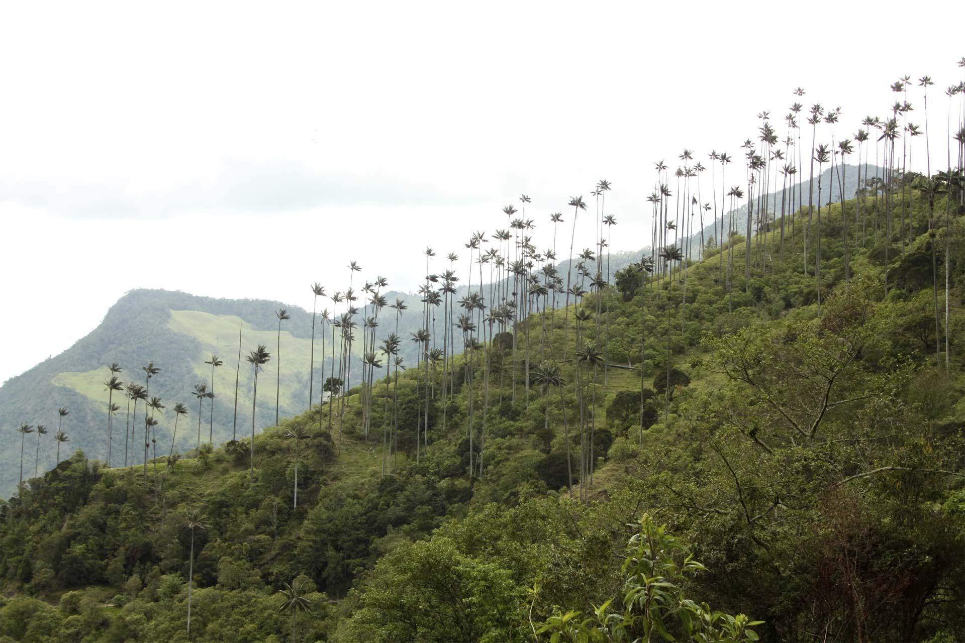 El país sudamericano quiere llegar a deforestación neta cero en el Amazonas, para el 2020