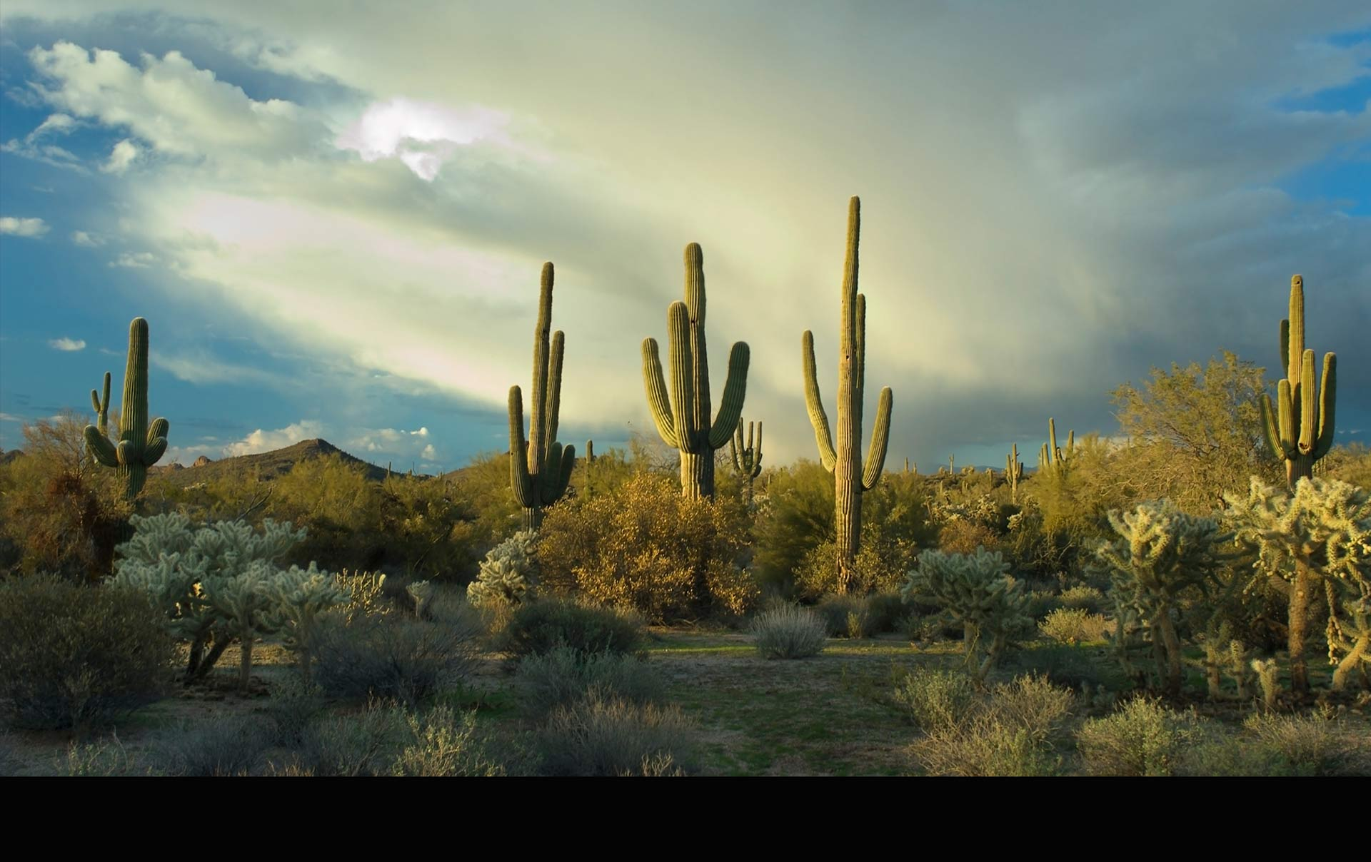 La explotación de cactus por parte del humano está poniendo en riesgo la existencia de dicha planta en el país y el mundo