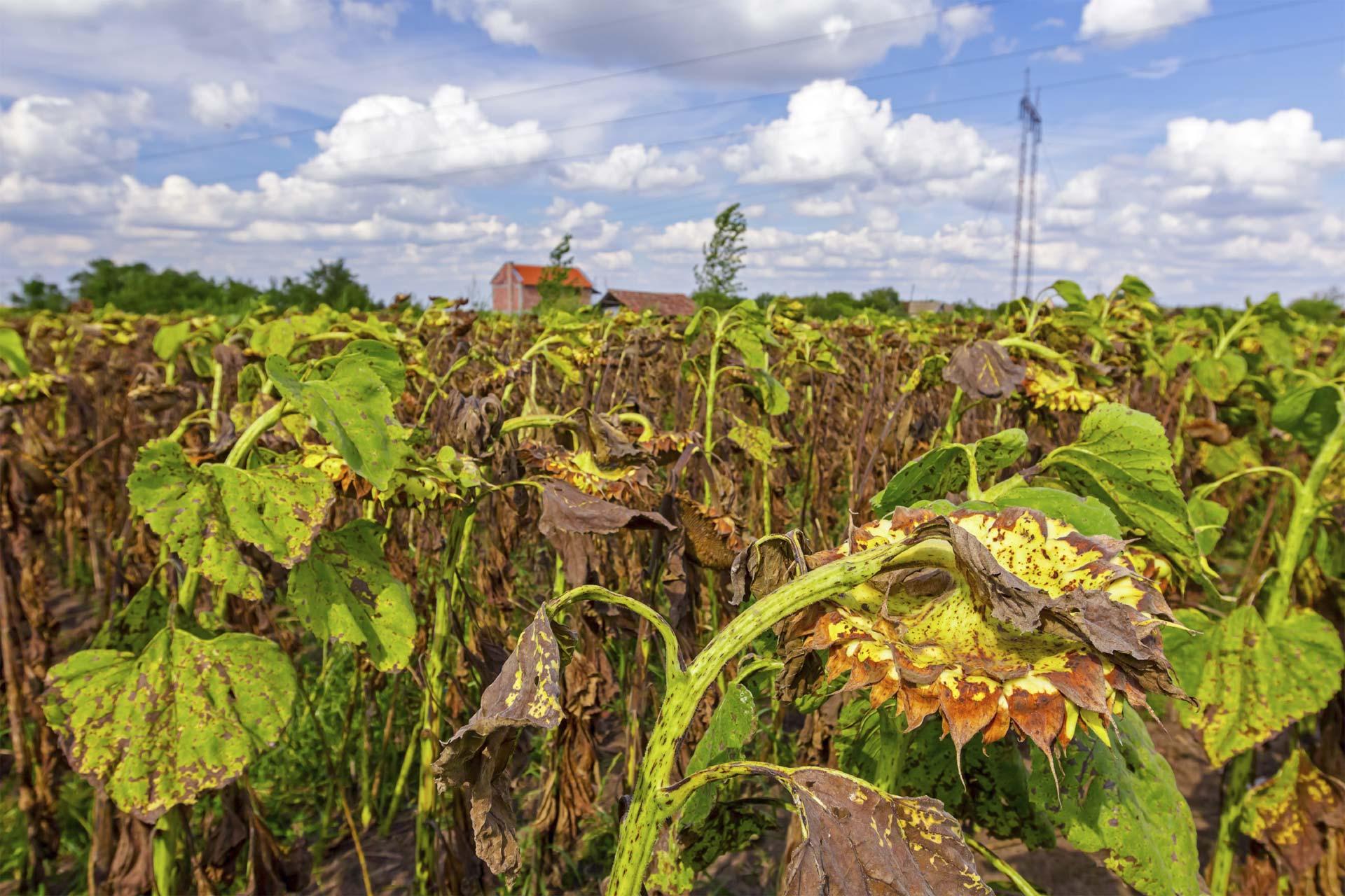 Los cambios de clima atentan contra la capacidad de producir alimentos de los países en desarrollo