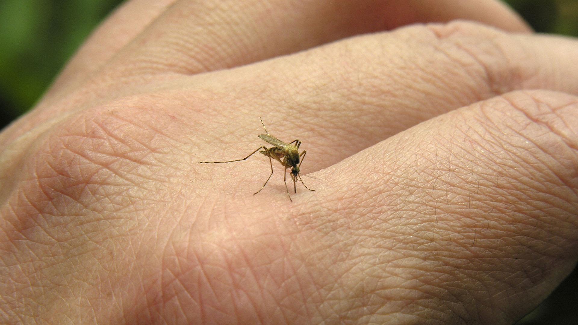 En 2014 se registraron más de 30 mil contagios de este virus en la nación centroamericana