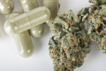 El Congreso chileno discute un proyecto que despenalizaría el autocultivo de marihuana medicinal y recreativa