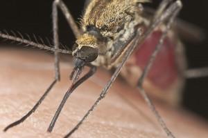 El virus Zika ya se ha extendido por 10 países suramericanos, parte de Asia y Oceanía