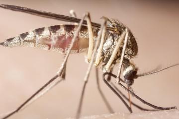 Autoridades sanitarias calculan que casi 700 mil personas enfermarán este año del virus