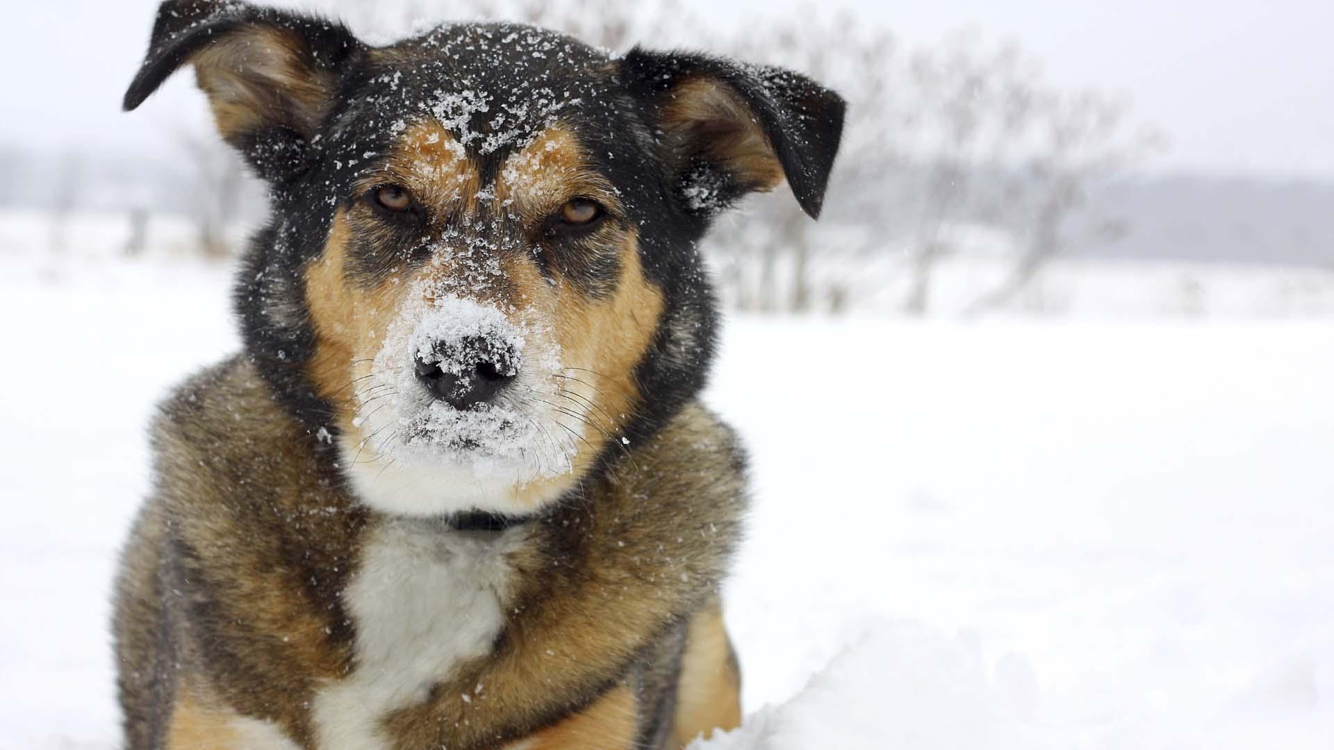 Ante la importancia que se les está dando a las mascotas, se espera la pronta aprobación del proyecto de ley
