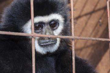 Roban animales del Zoológico Metropolitano del Zulia para comer