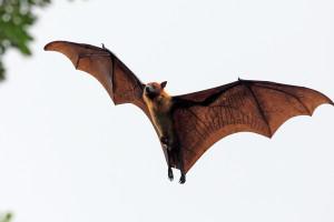El llamado Tratamiento Batman sería la clave para evitar enfermedades virales