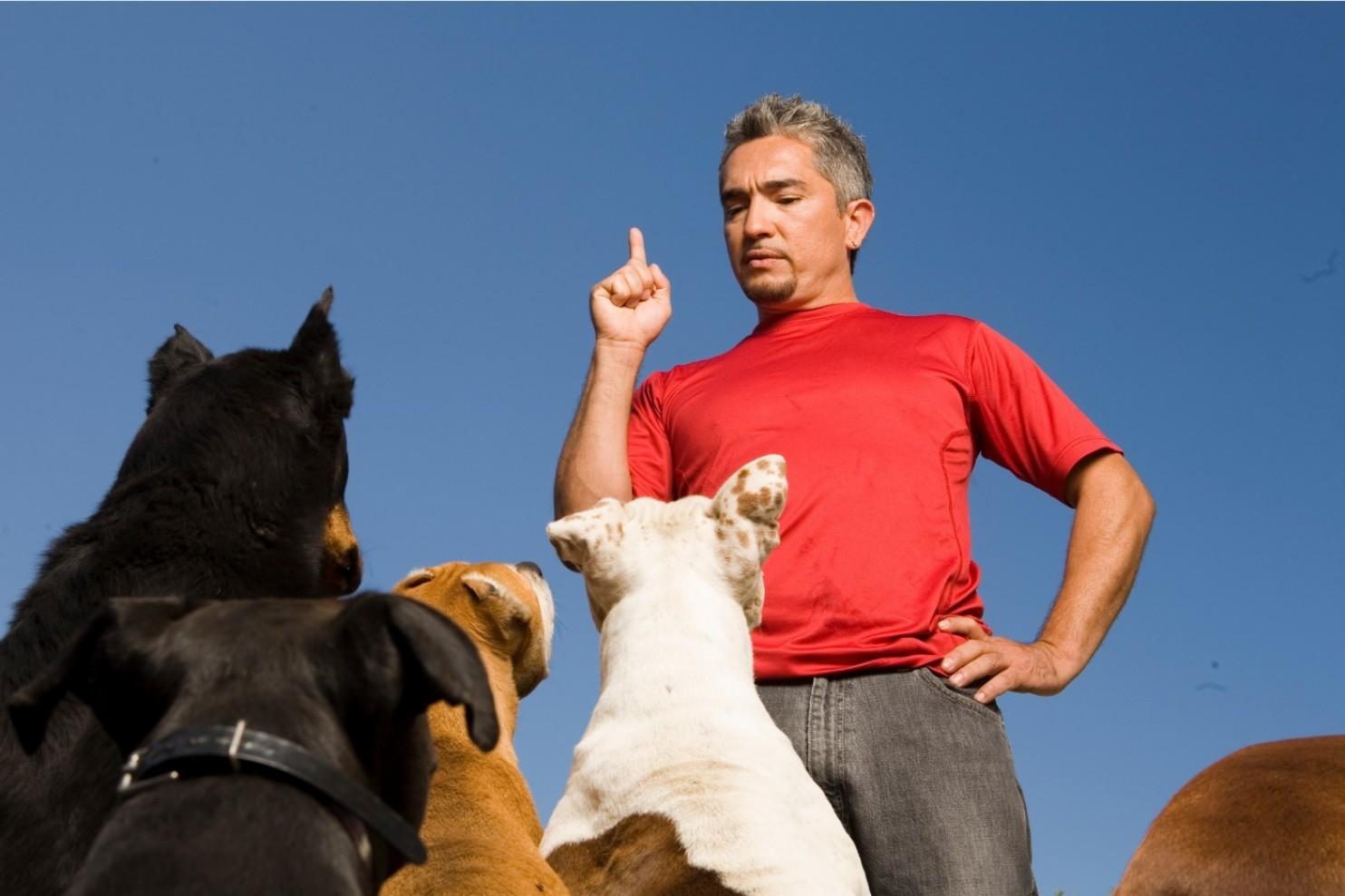 En el vídeo difundido por diferentes medios parece verse al entrenador evitando que el perro atacará al cerdo