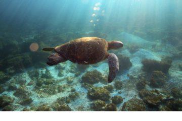 Prevención ante comercio ilegal de especies