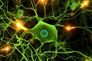 Estas células identifican un sinfin de propiedades que podrían curar la diabetes o elaborar tratamientos para enfermedades como el alzheimer