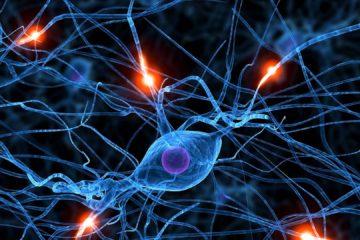La Organización Mundial de la Salud (OMS), afirma unos 50 millones de casos epilépticos en el mundo lo que convierte a esta enfermedad neurológica mortal