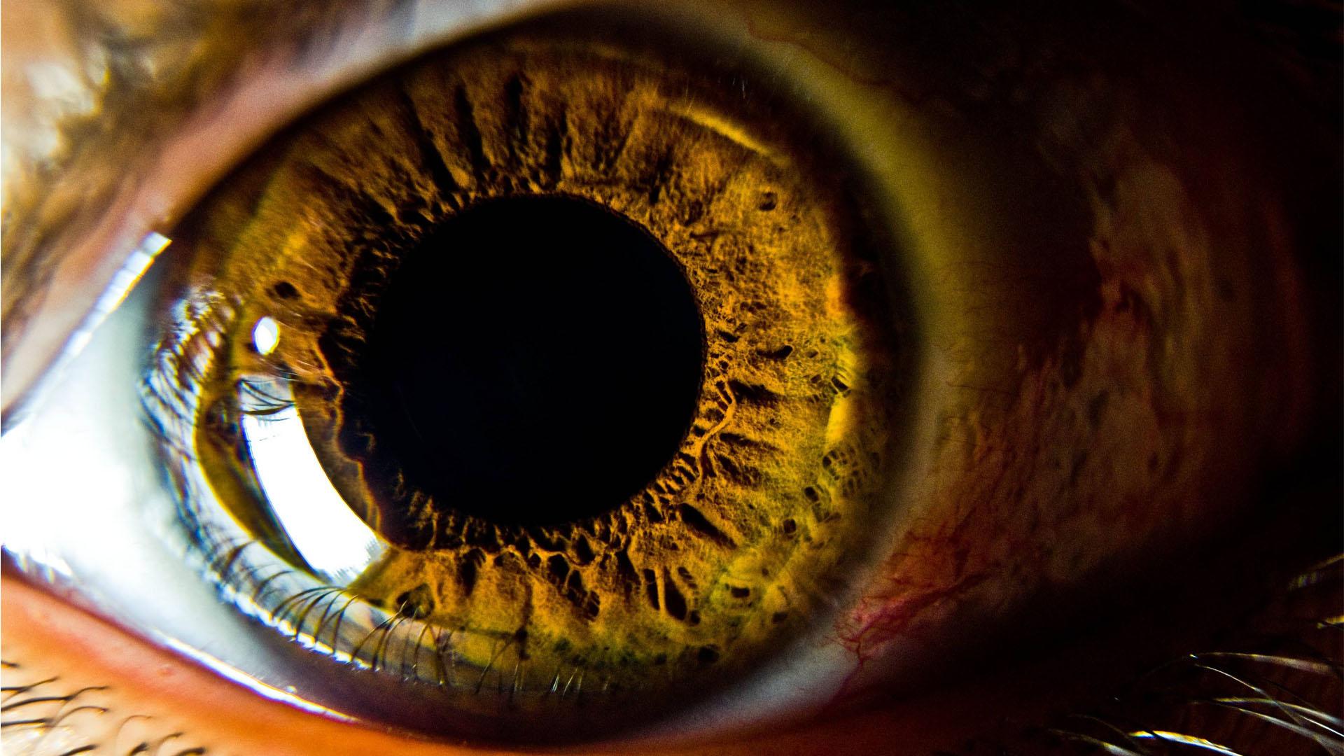 Un test para la capacidad visual podrá detectar tempranamente los síntomas de la enfermedad