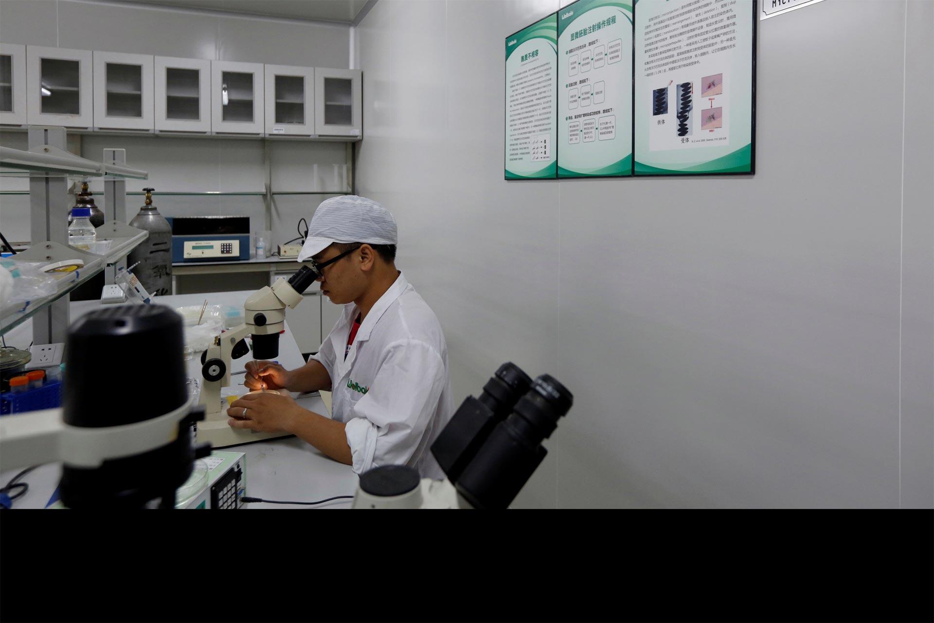 Vacunas contra el zika triunfan en monos