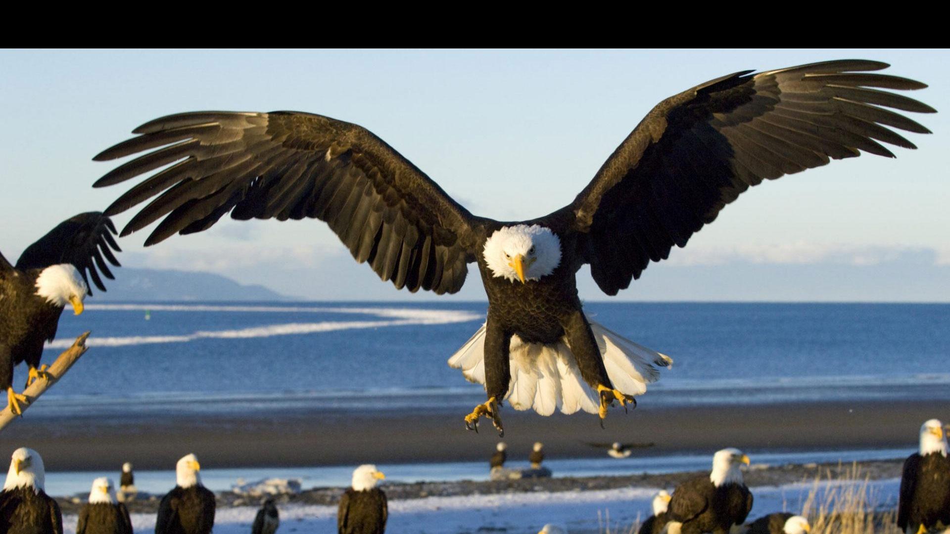 Águilas: una innovación en seguridad