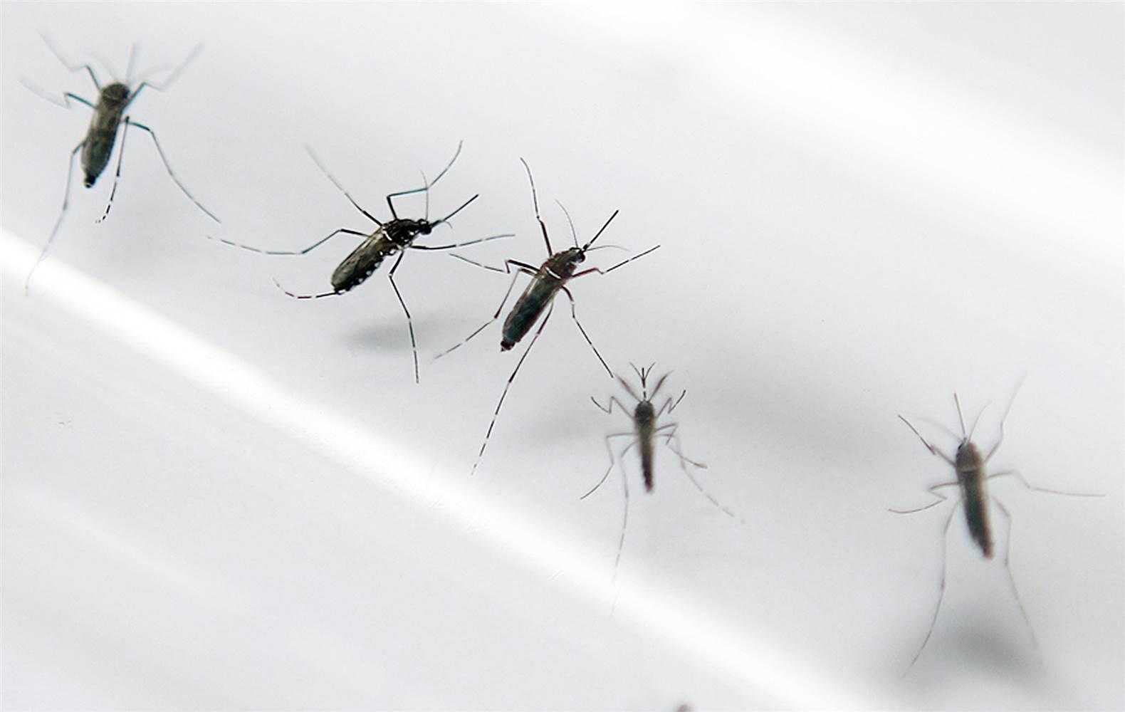 Presentan tanque asesina mosquitos