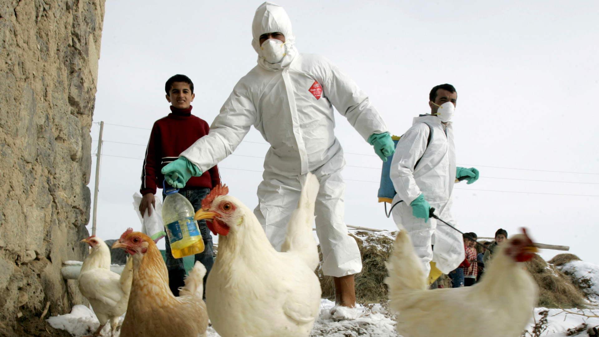 Un estudio demuestra que las migraciones de aves pueden expandir el virus alrededor del mundo