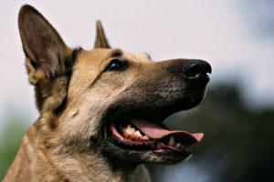 La herramienta tiene la función de detectar explosivos simulando las capacidades que desarrolla la nariz de un perro