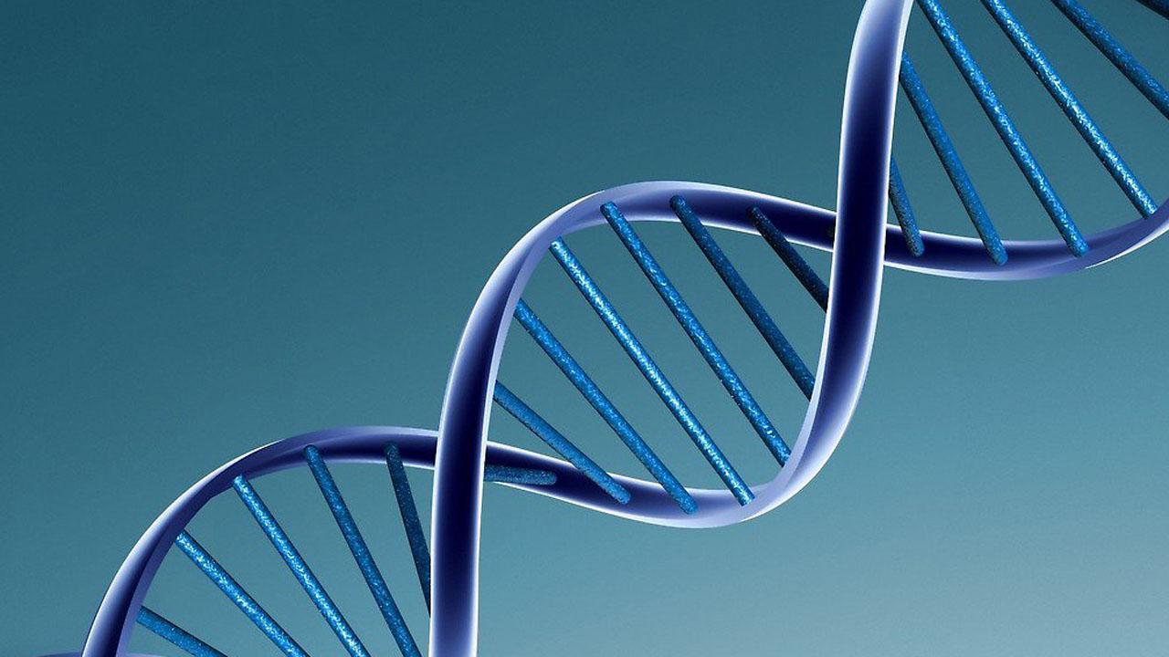 el estudio de los genes ayudará a la enfermedad