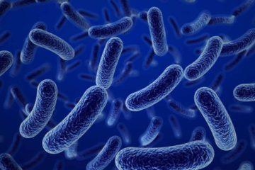 """""""DFSO+"""" es una bacteria que brinda energía"""