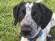 El canino estaba siendo entrenado en detección de bombas cuando se escapó y estuvo tres horas corriendo por las pistas del aeropuerto