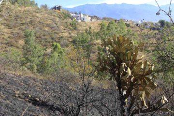 Los verdes árboles que desplegaban bosques inmensos han ido disminuyendo en nuestro continente