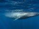 """El """"reto de la Ballena Azul"""" o """"Blue Whale"""" se trata de una serie de 50 peligrosos desafíos que se presume han causado más de 130 muertes de adolescentes"""