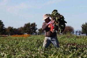 Esta ONG se pronunció sobre las condiciones de bienestar social y alimentario de los campesinos e indígenas