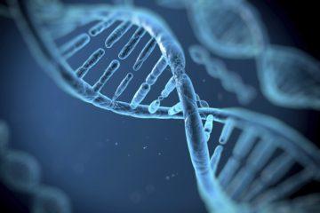 Un grupo de investigadores de la Vrije Universiteit de Amsterdam hicieron descubrimientos acerca de áreas del cerebro