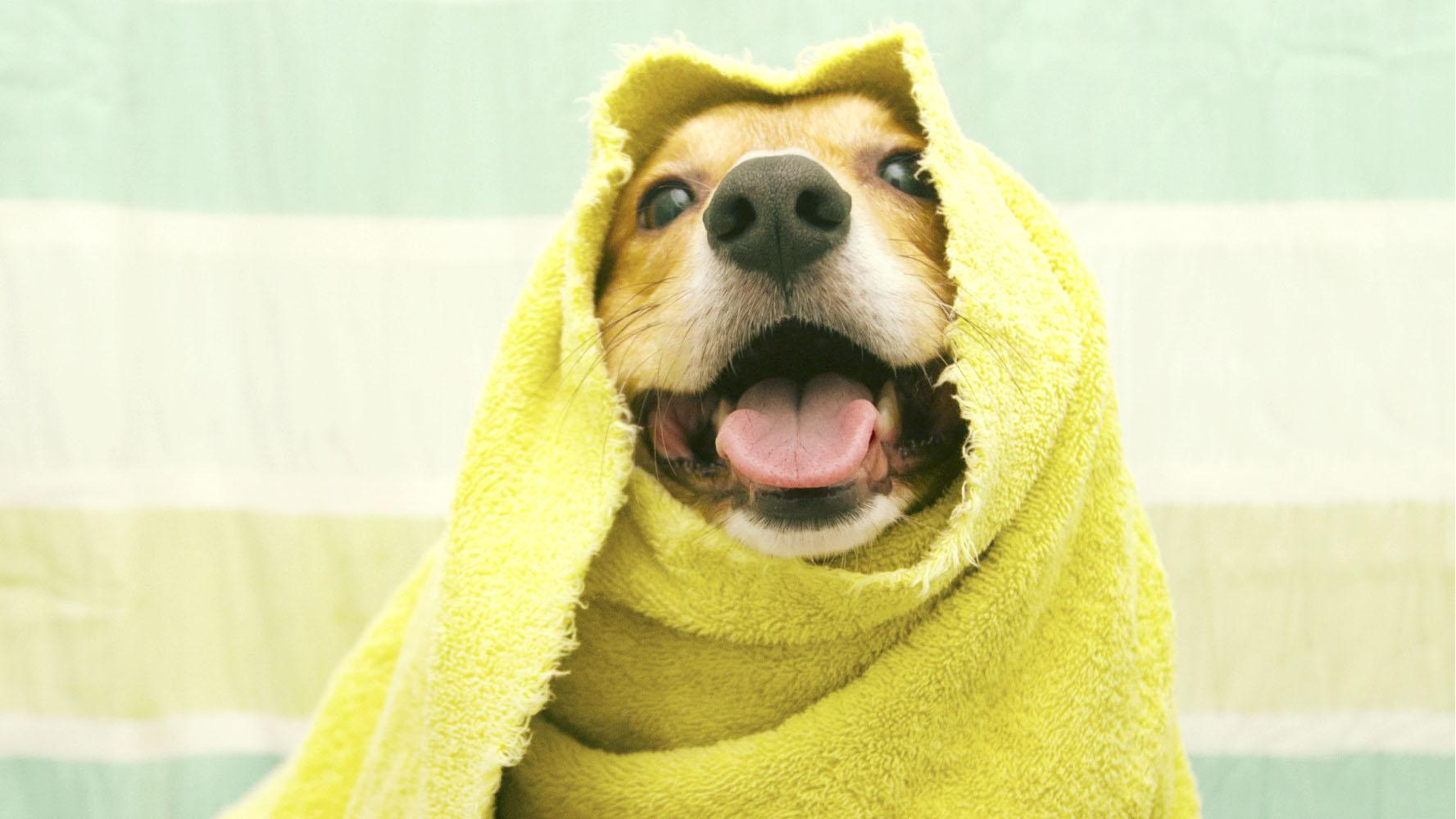 Una vez que la situación se tranquilice, llévala al veterinario para descartar reacciones alérgicas internas o intoxicaciones