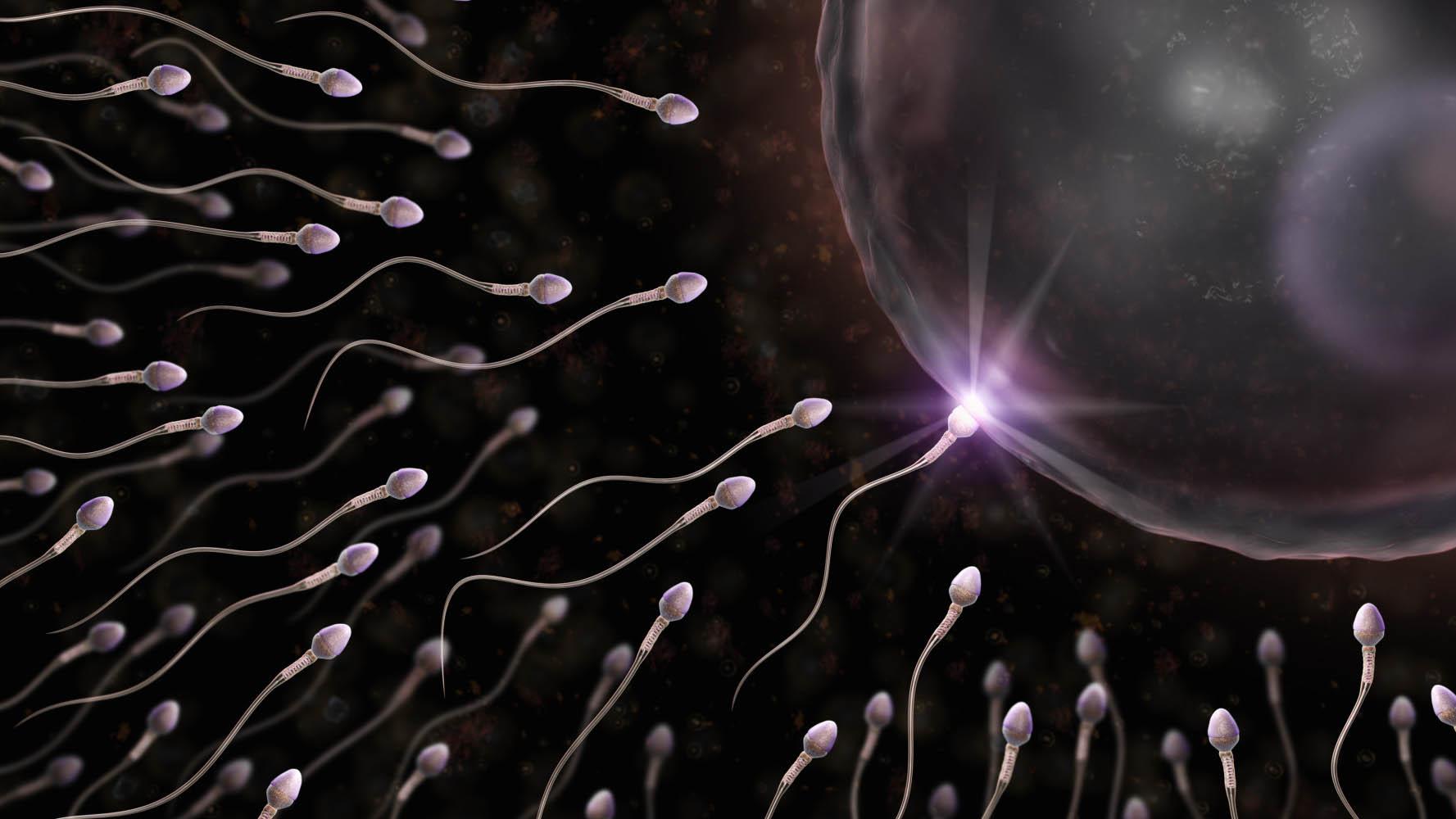 Un estudio comprobó que las células madre que producen los espermatozoides pueden ser extraídas y congeladas