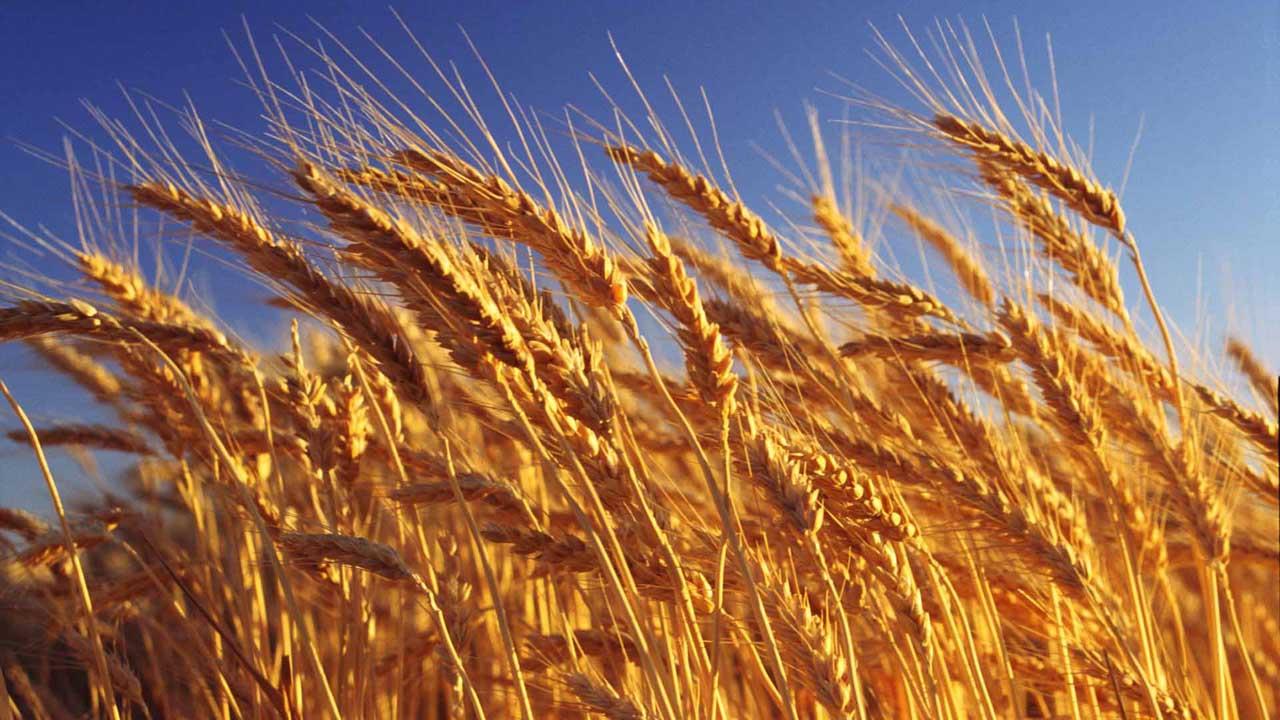 A mayor consumo de granos integrales disminuye el riesgo de sufrir infartos