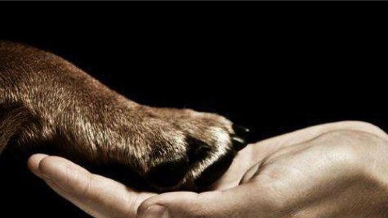 """La """"Ley Desmond"""" permite al juez asignar defensores voluntarios que investiguen casos de maltrato animal"""