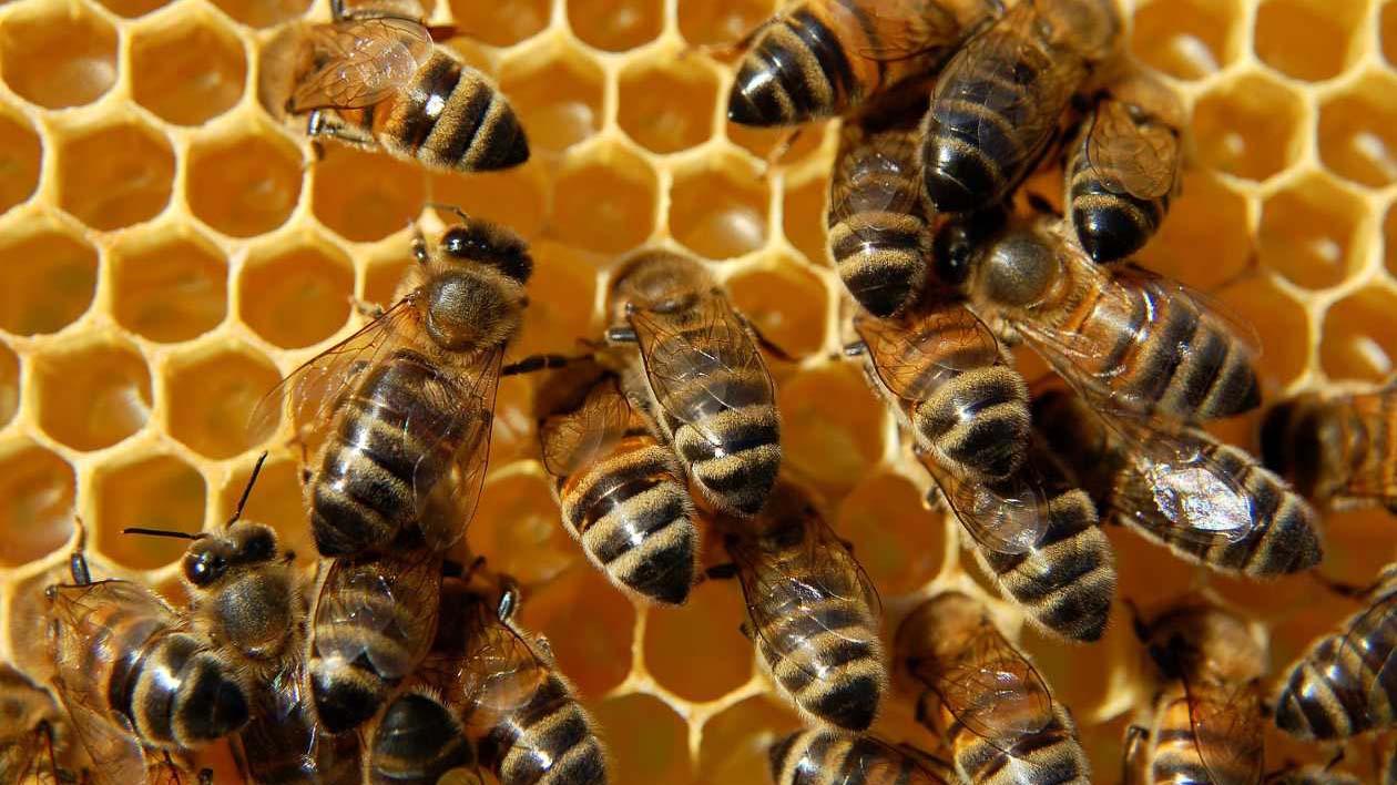 Según una investigación británica los insecticidas de la familia de los neonicotinoides limitan las posibilidades de supervivencia de los insectos