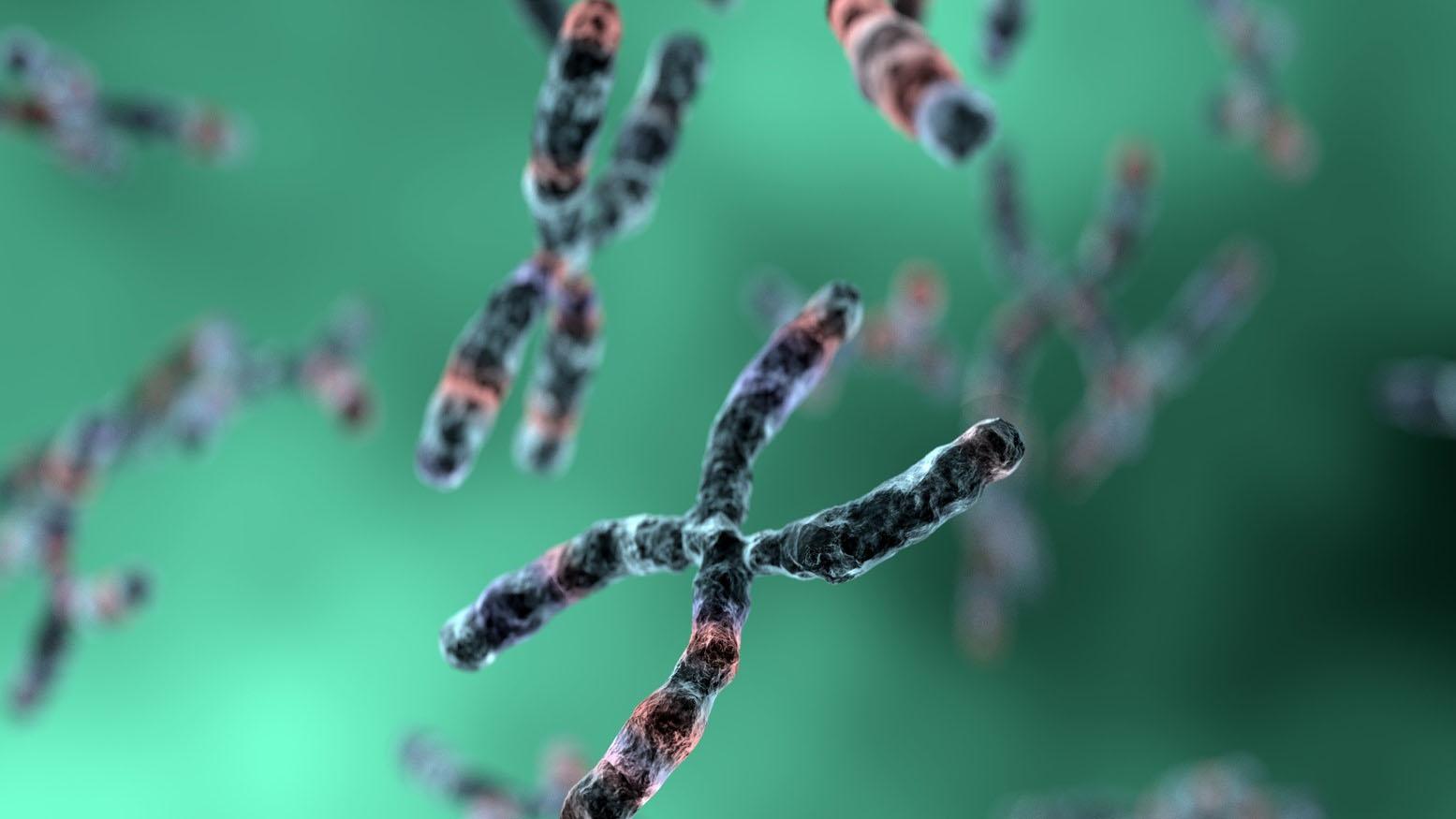 Expertos demostraron que la porción funcional del genoma es aquella que surgió a través del mismo y se mantiene por selección natural