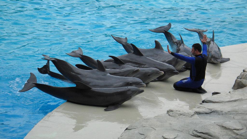 La reforma legal impide usar mamíferos marinos en espectáculos y terapias, lo que se suma a una prohibición anterior de emplear animales en circos