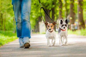 Científicos señalaron que los adultos mayores que paseaban a sus perros obtenían un menor indice de masa corporal y limitaciones físicas en las actividades diarias