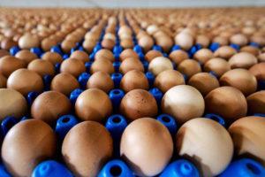 La Agencia de Normas Alimentarias informa que cifra que supera 33 veces más lo estimado