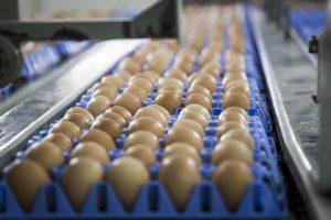 Tras la existencia de los huevos contaminados con el insecticida Fipronil, las autoridades apertura sanciones ante aquellos países que no informen inmediatamente sobre los mismos