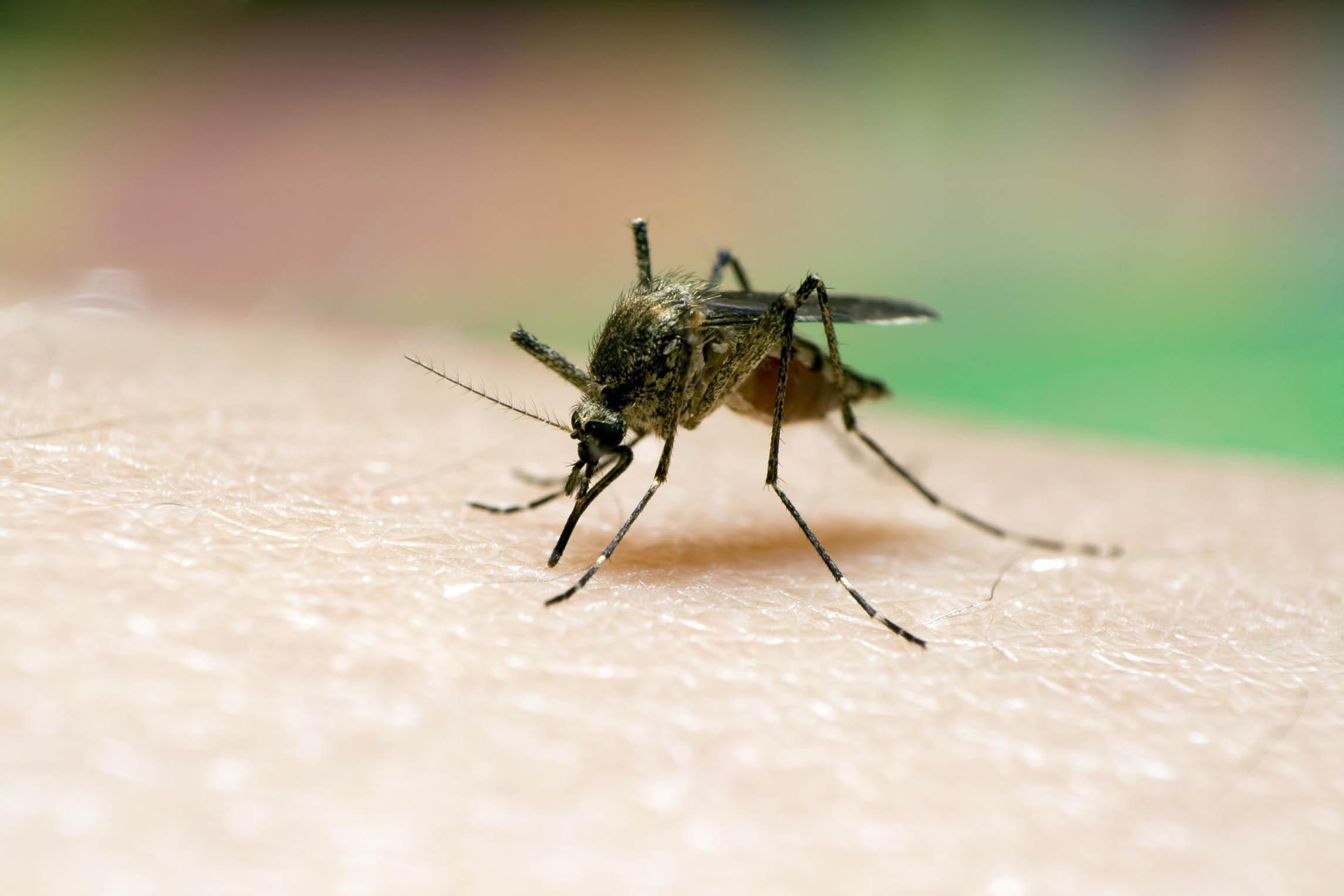 Piden calmar brote de paludismo en refugios de Ciudad Guayana