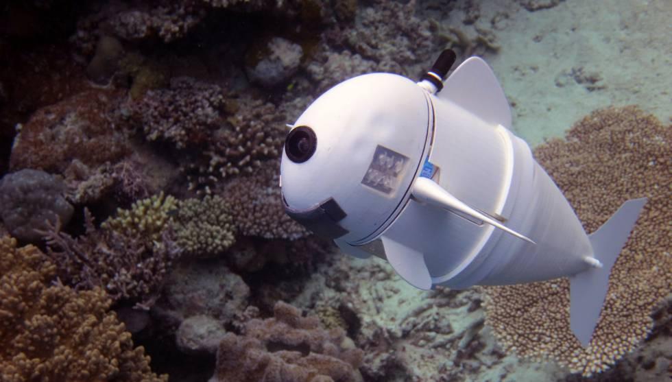 SoFi, el pez robótico que documenta la vida marina