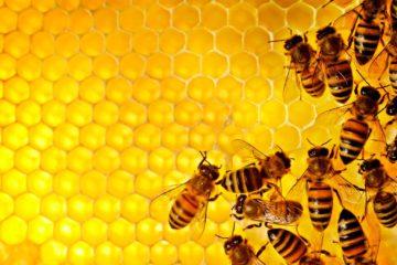 Estados miembros de la UE, han votado a favor de la prohibición y salvar a las abejas