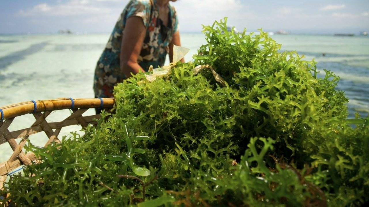 Crean alimentos saludables con microalgas