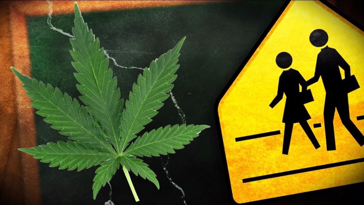 Los sujetos poseían 37 plantas de cannabis en el sector Aparicio, municipio Piar, estado Monagas