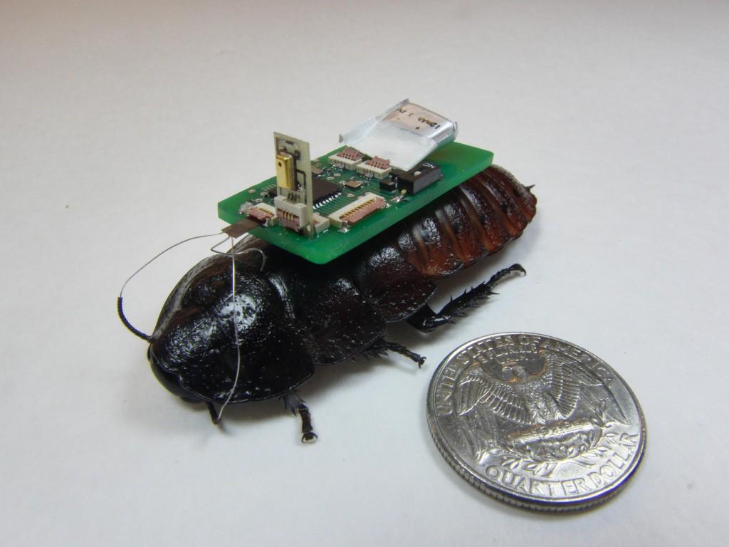 Desarrollan cucarachas cyborg que podría salvar vidas en el futuro