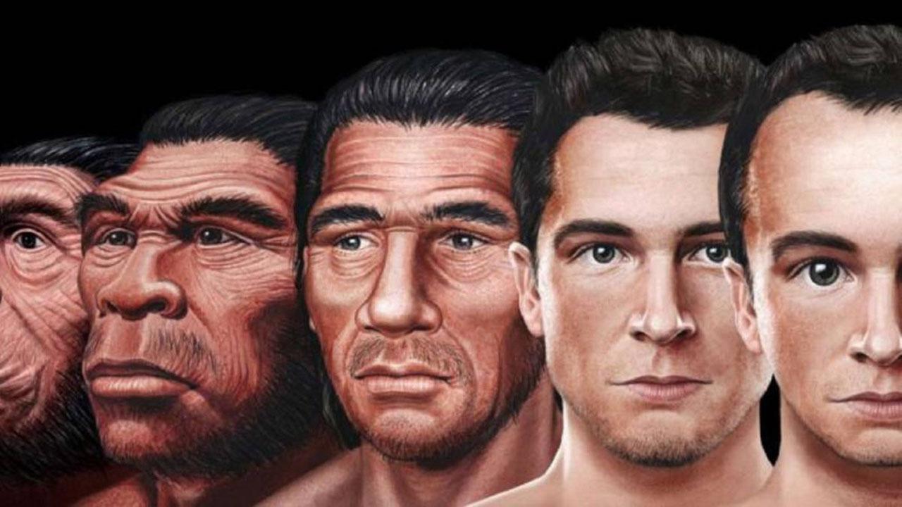 El hombre tendrá un cráneo más desarrollado y una cara más pequeña