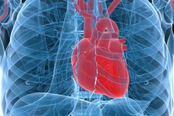 Los científicos están perfeccionando los detalles del órgano para trasplantarlo a una persona