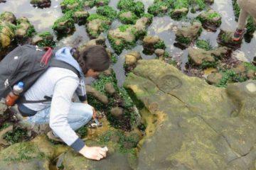 Descubrieron moléculas para antibióticos en Perú