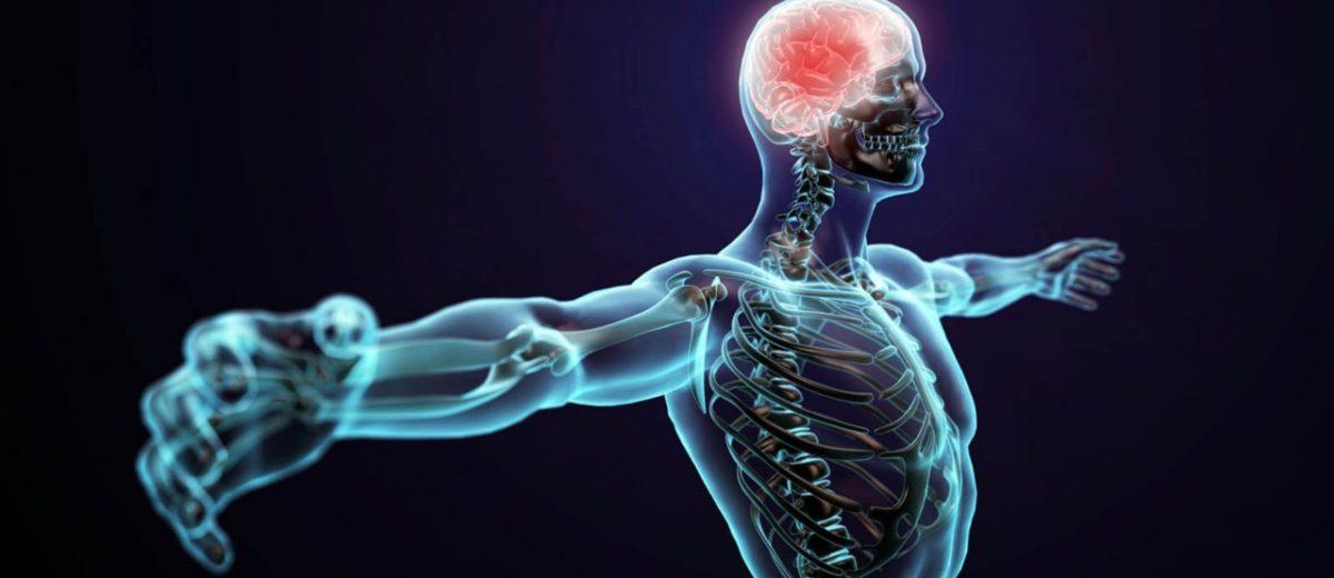 Desarrollan un sistema GPS que rastrea dentro del cuerpo humano ...